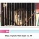 Stalowa Wola: Nie dla cyrku ze zwierzętami w Stalowej Woli
