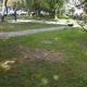 Stalowa Wola: Po wyciętych drzewach zostały tylko ślady na trawniku