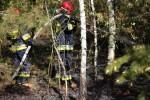 Do pożaru doszło kilkadziesiąt metrów od zabudowań przy ulicy Leśnej w Lipie. Na miejsce zadysponowano wóz bojowy z OSP Lipa oraz wóz z zawodowej jednostki straży pożarnej w Stalowej Woli.