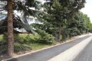 Los czterech dorodnych świerków przy ulicy Poniatowskiego jest przesądzony. Zostaną wycięte, bo przeszkadzają w ułożeniu chodnika przy modernizowanej drodze.
