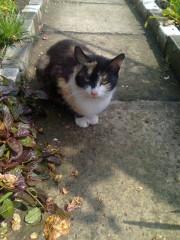 Siedzi w krzakach, boi się kotów działkowych, biegnie za człowiekiem płacząc rozpaczliwie. Chętnie siedzi na kolanach, lubi być głaskana. Kotka jest młoda trzykolorowa brązowo-rudo- biała. Czy znajdzie się ktoś dobry i pomoże jej znaleźć dobry dom? Porzucona na działkach kotka czeka na nowego właściciela. Jest bardzo przywiązana do ludzi.