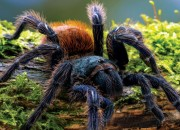 Mają nadzwyczajne zdolności adaptacyjne. Żyją wszędzie - opanowały wszystkie środowiska na Ziemi - nie spotkamy ich tylko na biegunach. Znamy już ponad 42 tys. gatunków tych zwierząt, a wciąż odkrywane są kolejne. To oczywiście pająki.