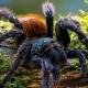 Stalowa Wola: Świat pająków