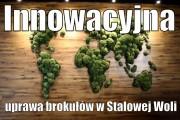 Innowacyjna uprawa brokułów w Stalowej Woli.