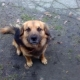Stalowa Wola: Roki - pies do wzięcia, czeka na właściciela