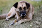 Od 1 stycznia 2019 roku właściciele psów nie będą mieli obowiązku uiszczania rocznej opłaty w wysokości 40 złotych za swojego pupila. Taką decyzję podjęli radni miejscy.