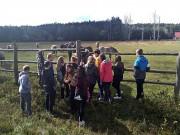 Stowarzyszenie Leśnicy dla Polski jest na etapie finalnym w autorskim projekcie edukacyjnym na rzecz środowisk dziecięco młodzieżowych.