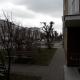 Stalowa Wola: Mieszkańcy protestują przeciwko bezsensownemu okaleczaniu i niszczeniu drzew na terenie miasta Stalowa Wola