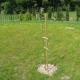 Stalowa Wola: W Pysznicy z posesji znikają ozdobne drzewka i krzewy