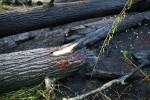 Od wczoraj to już drugi pożar przy zrewitalizowanych błoniach na Sanem. W trakcie imprezy masowej między oczkiem a mostem na Pysznicę doszło do pożaru traw i nieużytków.