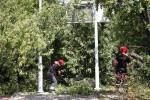 W niedzielne przedpołudnie drzewo runęło na przystanek autobusowy i chodnik. Na szczęście nikt nie został ranny.