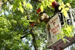Strażacy mogli jedynie odciąć zagrażający bezpieczeństwu fragment, jednak na drzewie w dalszym ciągu pozostało wiele suchych gałęzi.