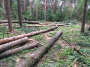 Sprawa roślinności i drzew jest dla mieszkańców Stalowej Woli ze względu na bliskość zakładów przemysłowych bardzo ważna. Jak wielokrotnie słyszeliśmy to jedyna naturalna bariera ochronna.