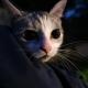 Stalowa Wola: Kot uciekł na drzewo w Parku w Charzewicach przed psami. Interweniowała straż