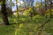 Radni miejscy poszerzyli katalog pomników przyrody w Stalowej Woli, o co zabiegali członkowie Polskiego Towarzystwa Dendrologicznego.