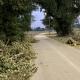 Stalowa Wola: Na błoniach nad szlakiem pieszo rowerowym runęła duża gałąź