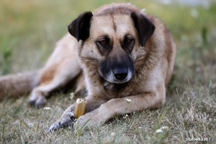 Apel do posiadaczy psów - dbajcie oto, żeby psy miały smycze i kagańce … - twierdzi pan Kamil.