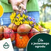Jesienią nie powinniśmy rezygnować ze świeżych warzyw i owoców, będących źródłem naturalnych witamin wzmacniających odporność organizmu.