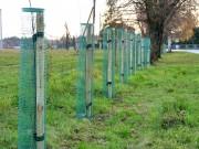 Rośliny zostały posadzone na osiedlu Zasanie oraz w rejonie ul. Karnaty w Stalowej Woli.