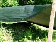 Od 8 czerwca trwa proces przeniesienia mrówczej kolonii do bezpiecznego miejsca, w ramach prac utworzenia w Stalowej Woli Parku Zimnej Wody.