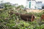 Trwa wycinka drzew wzdłuż ulicy Popiełuszki w Stalowej Woli. Mieszkańcy przecierają oczy ze zdumienia bo do końca wierzyli, że uda się je uratować.