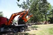 Po raz pierwszy miasto zdecydowało się na przesadzenie dużego drzewa. Teraz trzeba czekać i obserwować czy się przyjmie.