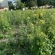 Stalowa Wola: Co się stało z kwietną łąką? - pytają mieszkańcy