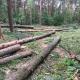 Stalowa Wola: Ościenne gminy i prywatne osoby zrekompensują Lasom Państwowym tysiąc hektarów?