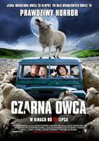Plakat: Czarna owca