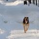 Stalowa Wola: Na co idą podatki od stalowowolskich psów?