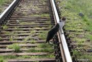 Zbliża się sezon urlopowy. Dla ludzi upragniony, dla zwierząt niekoniecznie, gdyż właśnie w tym okresie nasila się problem bezdomności zwierząt.