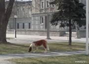 Błąkające się psy bez smyczy, kagańca i opiekunów oraz nieodpowiedzialni właściciele czworonogów to spory problem Stalowej Woli.