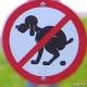 Stalowa Wola: Przepełnione pojemniki na psie odchody
