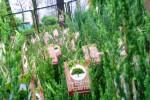 Podczas sobotniego Drzewka za makulaturę studenci Inżynierii Środowiska Katolickiego Uniwersytetu Lubelskiego w Stalowej Woli rozdawali sadzonki.