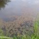 Stalowa Wola: Rzadko spotykana kotewka w rezewacie przyrody Pniów