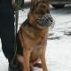 Stalowa Wola: Pies do wykrywania narkotyków nabytkiem stalowowolskiej policji