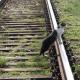Stalowa Wola: Nie będzie schroniska ale skuteczny program opieki nad zwierzętami