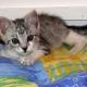 Stalowa Wola: Szukamy domu dla porzuconego kotka