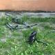 Stalowa Wola: Spalił się wózek dziecięcy